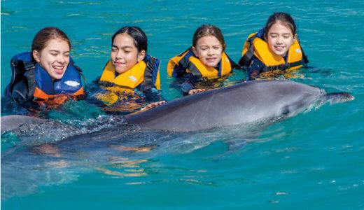 【おすすめ】沖縄旅行でイルカと泳ぐ!家族連れやカップルに大人気の体験スポットを紹介