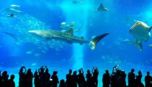 沖縄美ら海水族館に行くならみてほしい!他では絶対見れない珍しい生き物