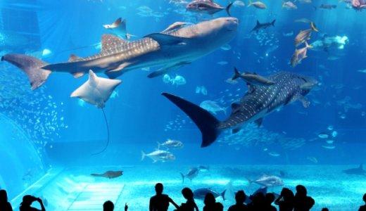 沖縄美ら海水族館にしかいない珍しい生き物!行くなら絶対見たい人気の魚や生き物