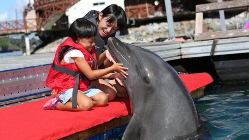 イルカと触れ合う親子