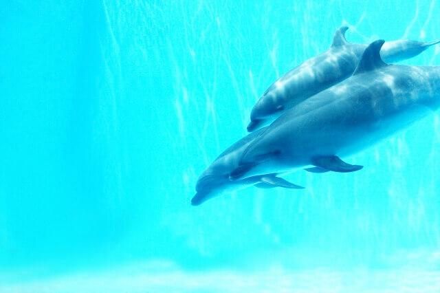 二頭のイルカ