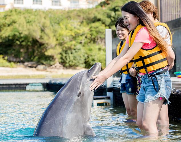 イルカと触れ合う女性