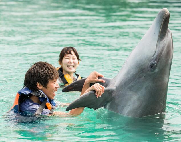 イルカと泳ぐ男性