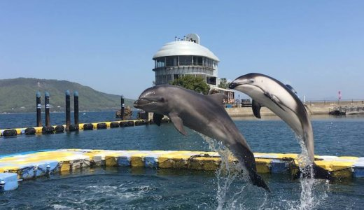 香川県津田「日本ドルフィンセンター」の割引券まとめ!お得なクーポンを使って安い料金でイルカと泳ぐ!