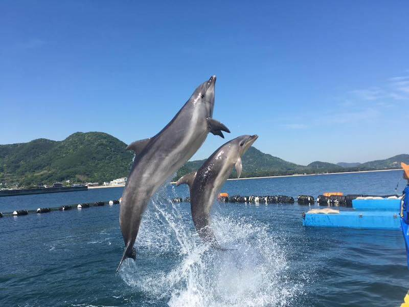 イルカがジャンプしている