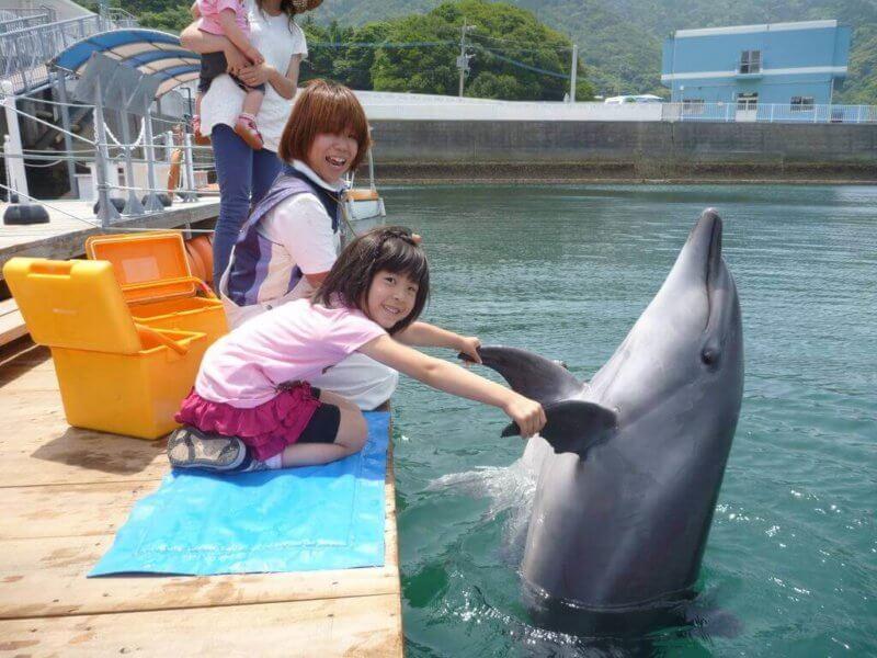 イルカと握手する少女