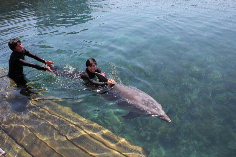 イルカにつかまって泳ぐ女性
