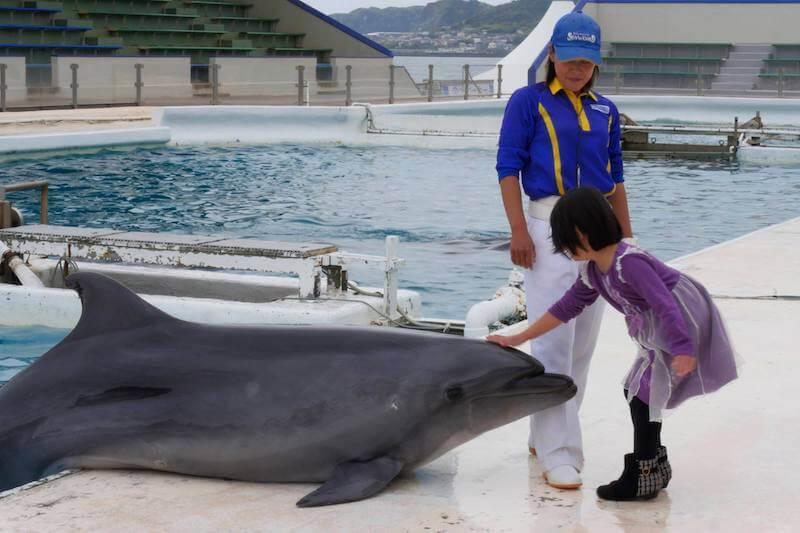 イルカにタッチする子供