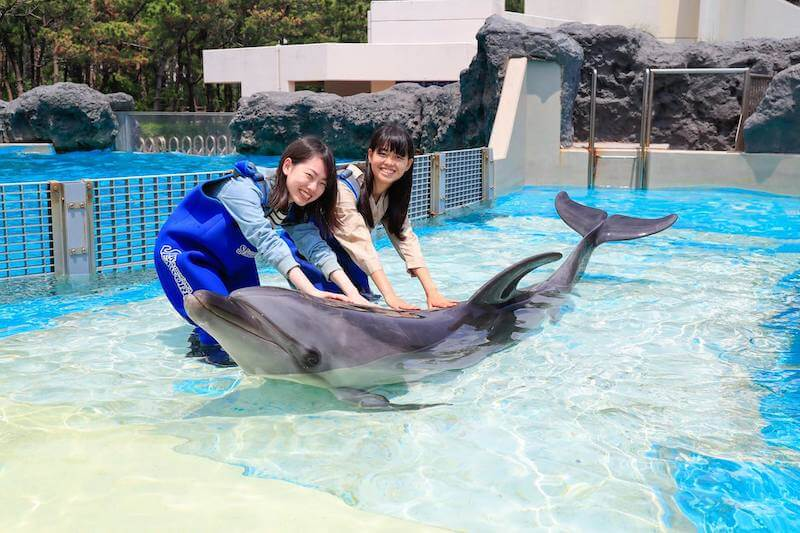 イルカと触れ合うカップル