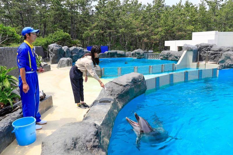 イルカに餌をあげる女性
