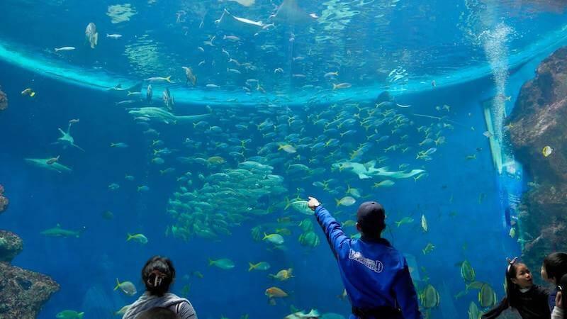 鴨川シーワールドの水槽