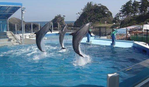 【福井】越前松島水族館に割引チケットをつかってお得におでかけ!東尋坊周辺のおすすめ観光スポット