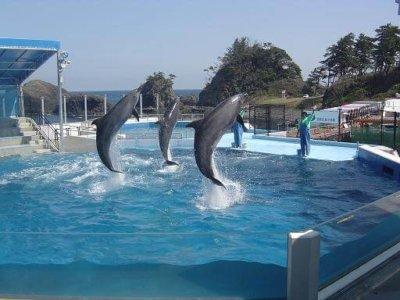 営繕松島水族館のイルカショー