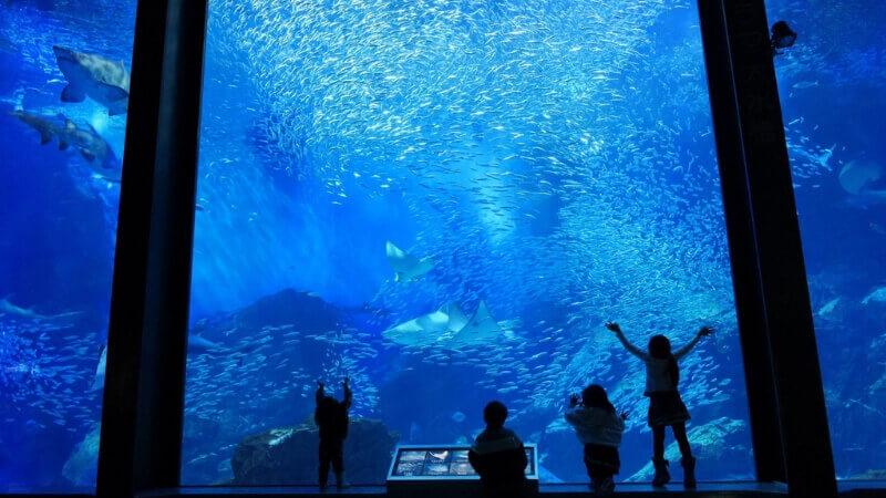 マリンワールド海の中道の夜の水族館