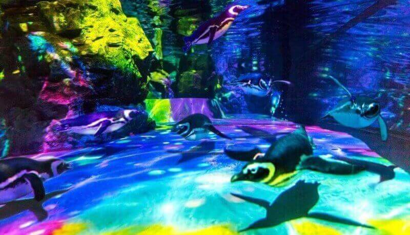 泳いでいるペンギン