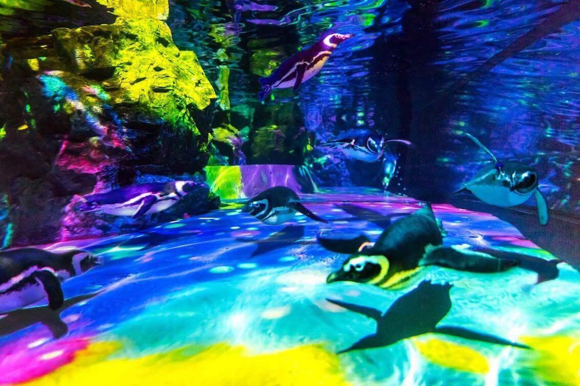 すみだ水族館のライトアップされたペンギン水槽
