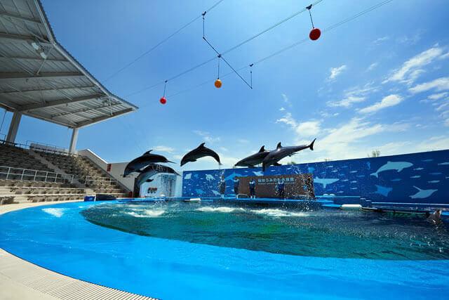 仙台うみの杜水族館のイルカショー