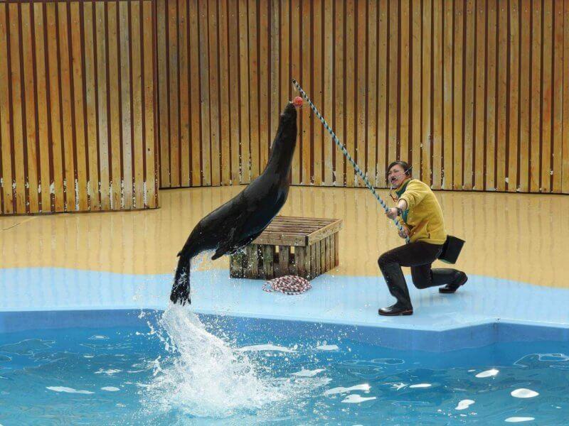 東武動物公園のアシカショー