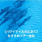 ハワイでイルカと泳ぐ