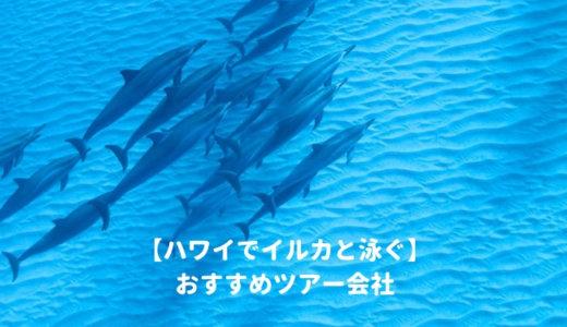 ハワイで野生のイルカと泳ぐ!おすすめツアー会社はココ!日本から予約してオアフ島でドルフィンスイムを体験しよう