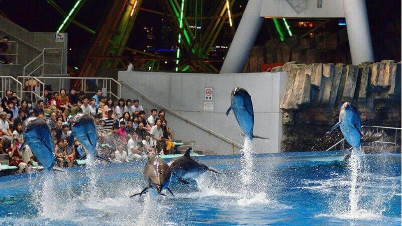 名古屋港水族館のナイトイルカショー