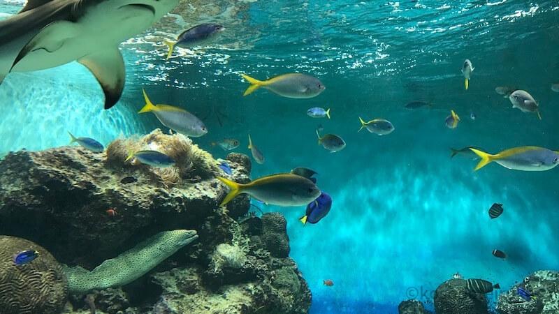 海響館のお魚ナイトトークショー