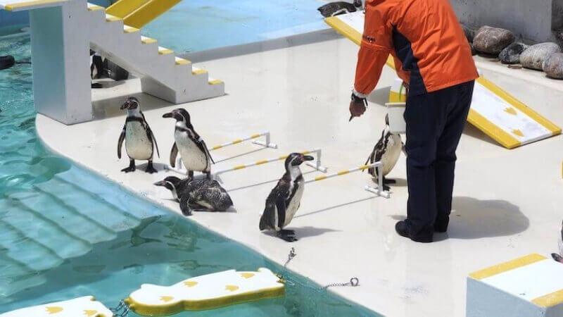 おたる水族館のペンギンショー