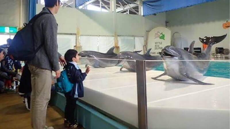 おたる水族館のイルカショー