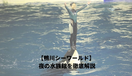 鴨川シーワールド「夜の水族館2019」を徹底解説!ナイトショーはいつから?営業時間は?料金や割引情報を紹介する!