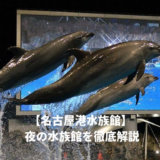 名古屋港水族館のナイトショー