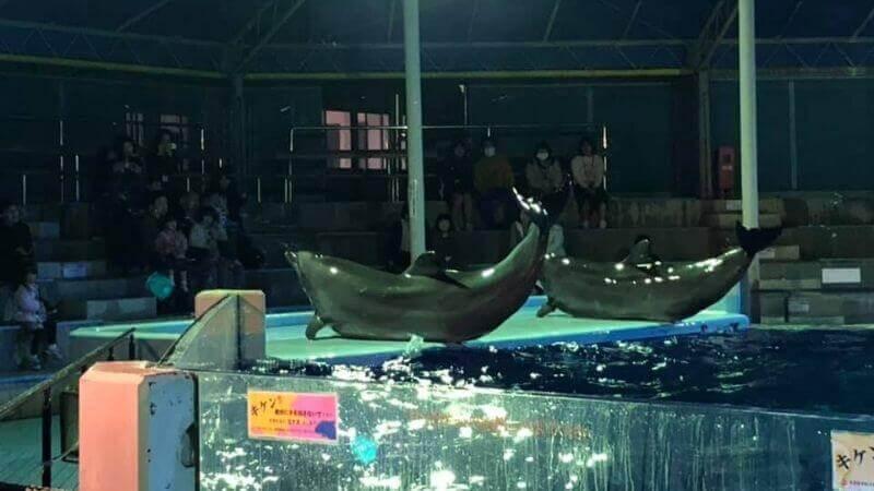 越前松島水族館のイルカのナイトショー