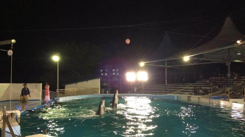 のとじま水族館のイルカのナイトショー
