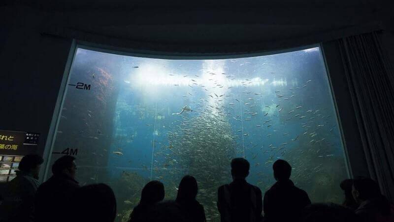 のとじま水族館のイワシショー