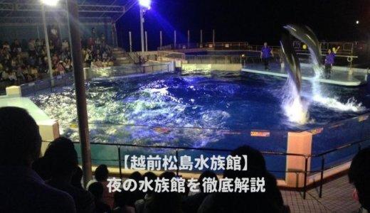 越前松島水族館の「夜の水族館2020」を徹底解説!ナイトショーはいつから?営業時間は?料金や割引情報を紹介する!