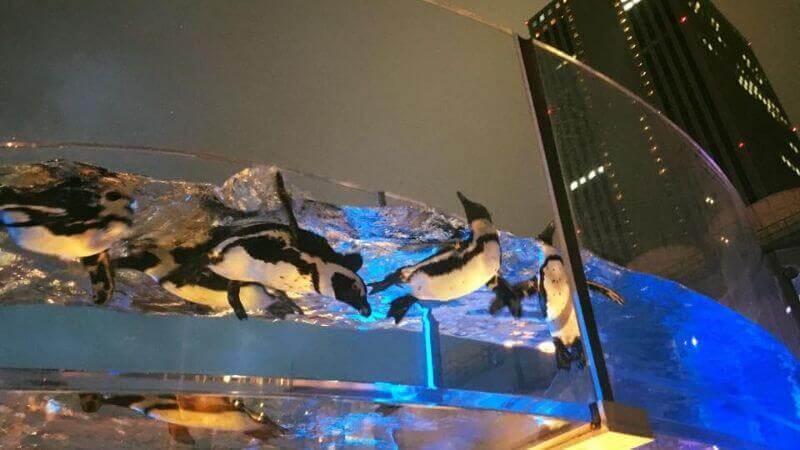 サンシャイン水族館の夜の水族館のペンギン