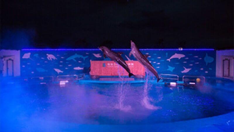 仙台うみの杜水族館のイルカのナイトショー