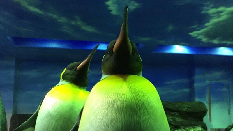 アクアスのペンギン