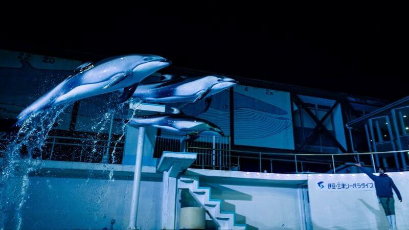 伊豆三津シーパラダイスのイルカのナイトショー