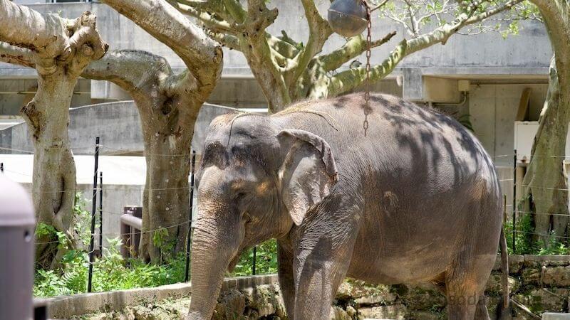 沖縄こどもの国の象