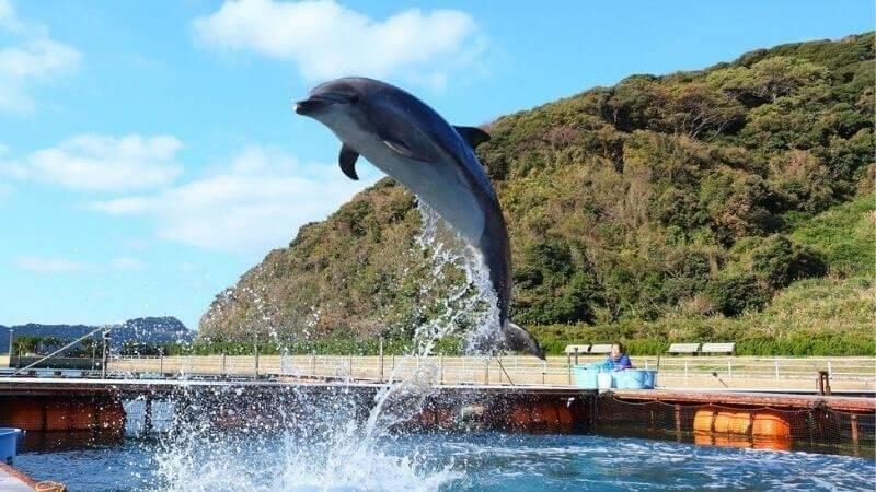 壱岐イルカパークのイルカ