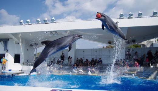 現役飼育員が選んだ「九州のおすすめ水族館ランキング」ベスト5!子供からカップルまで楽しめる!