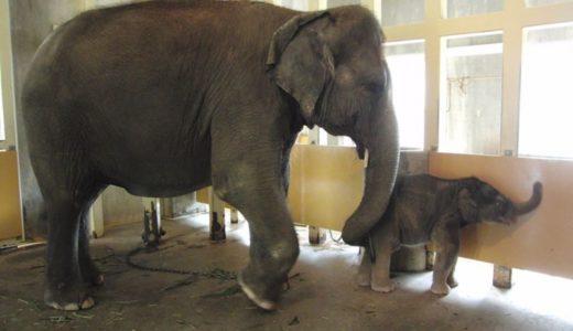 おすすめ九州・沖縄地方の「人気動物園」ランキング|飼育員が本気で選んだ