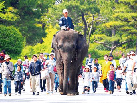 ゾウが園内を歩いている