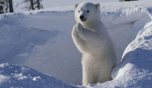 動物飼育員からノーベル賞大村智氏にお礼させてください。
