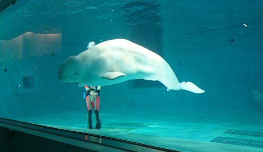 飼育員が選んだ中国地方の水族館おすすめランキング|家族連れやカップルに人気のお出かけスポット