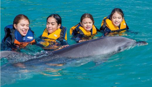 【イルカと泳ぐ】日本国内でドルフィンスイムができる場所まとめ|夢のふれあい体験をしよう!