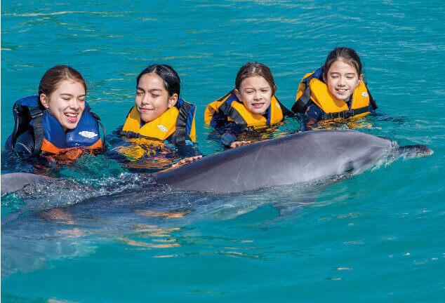 イルカと泳ぐ人