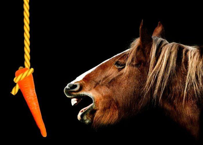 目の前にぶら下げられたニンジンを食べようとする馬