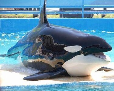日本の水族館で見れるイルカ・クジラの種類で打線を組んでみた!