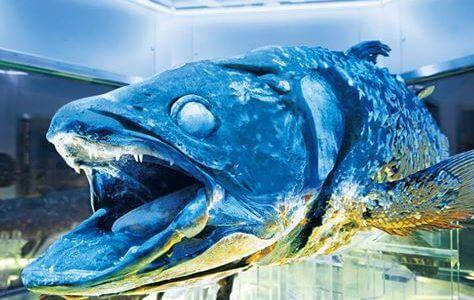 水族館の「中の人」も驚くマニアックすぎる水族館!あまり知られていないけど、行けばその凄さに驚かされる
